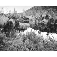 Outlet Lagoon (Hydro), Lake Monowai 2003