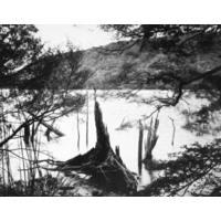Lake Edge, Remnant Spars, Lake Monowai 2003 (printed 2004)