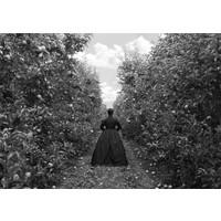 Apple Orchard, Heretaunga