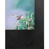 Fantail/Rhipidura Fuliginosa/Piwakawak (2005)