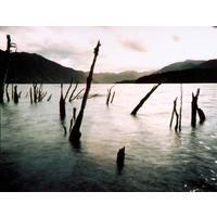 Remnant Lake Edge Spars, Lake Monowai 2003