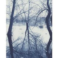 Trees at Lake Tutira (2008)