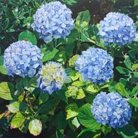 Blue Mopheads V