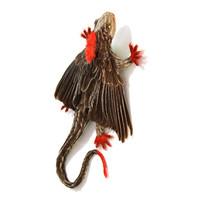 Wattle Lizard