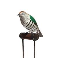 Shining Cuckoo (Pipiwharauroa)