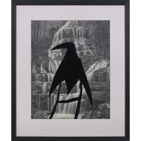 South Island Raven