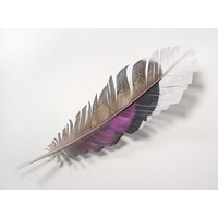 Mallard Duck Feather