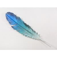 Blue Parrot Feather