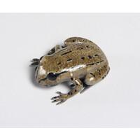 Hamilton's Frog (Large)