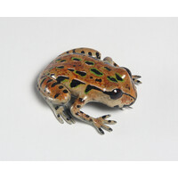 Archey's Frog (Large)