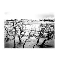 Mason Bay #04, Stewart Island 1988